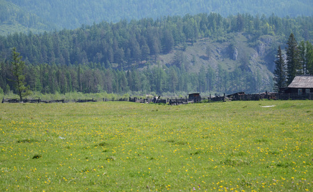 foothill: Summer pasture in the foothill of East Sayan Mountains, Buryatia, Tunkinskaya valley