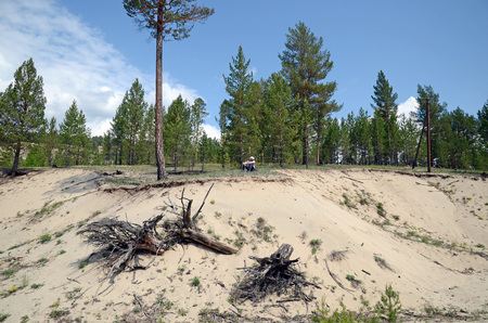 suelo arenoso: Sandy soil in Nilova Pustyn resort area. Spurs of the East Sayan, Buryatia Foto de archivo