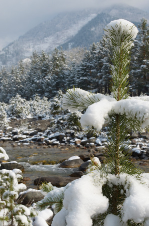 rages: Mountain stream in the spring snow. The Arshan resort