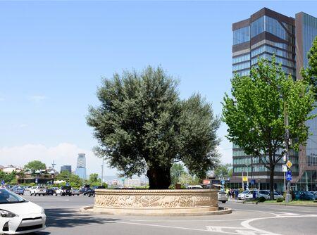 Large old tree in center of roadway on Shota Rustaveli Avenue in Tbilisi, Georgia 写真素材 - 135104901