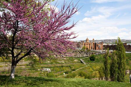 Blooming tree and church of St. Sarkis, Hrazdan Gorge, Yerevan, Armenia