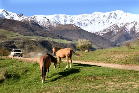 Pair of horses graze on background of snow-capped mountains. Armenia, Tatev, Syunik region