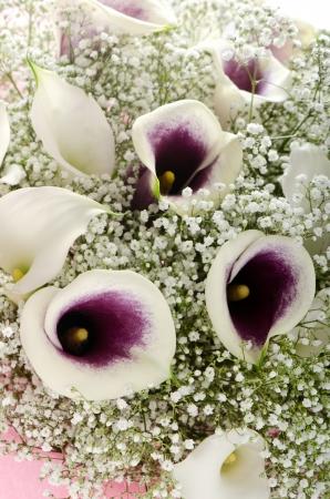 callas: Bouquet of purple and white callas and gypsophila Stock Photo