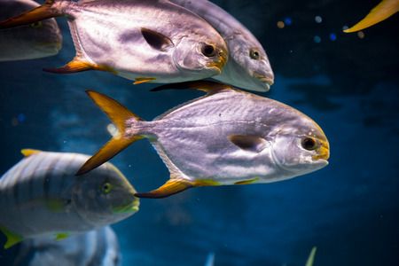 oceanarium: Amazing  tropical fish at Moscow Oceanarium, Russia
