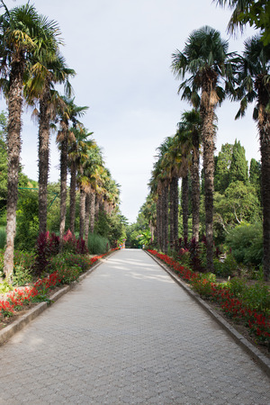 without people: Alley in Nikitsky botanical garden in Crimea