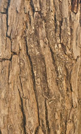 The surface texture of tree bark photo
