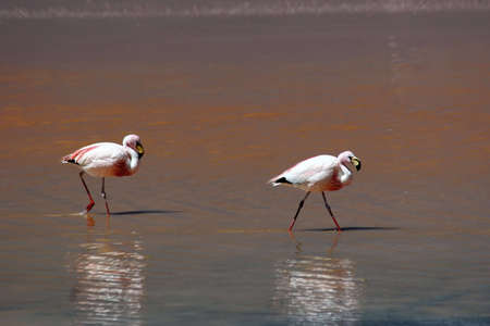 Highland Flamingos in the Red Lagoon Stock Photo - 3107748