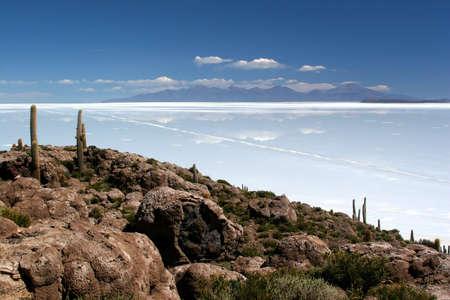 salar: Cactus Island, Salar de Uyuni