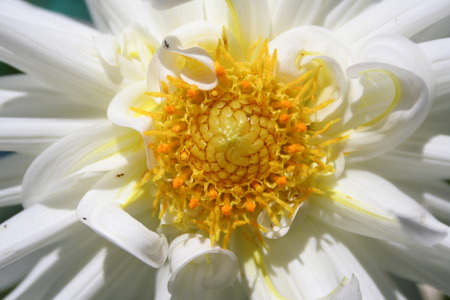 flor: flor branca Stock Photo