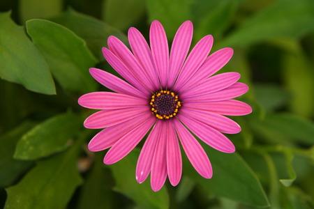 close p: Flower