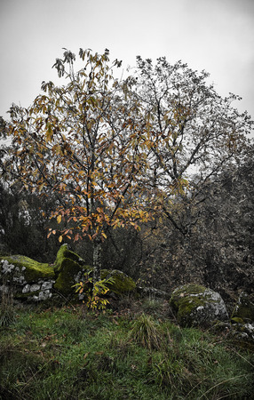 schist: Poidao is a very old little mountain village,in Arganil,Portugal