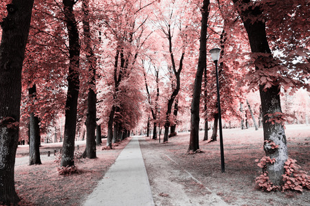 The Magical infrared efex photo
