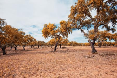 alentejo: Alentejo,Portugal