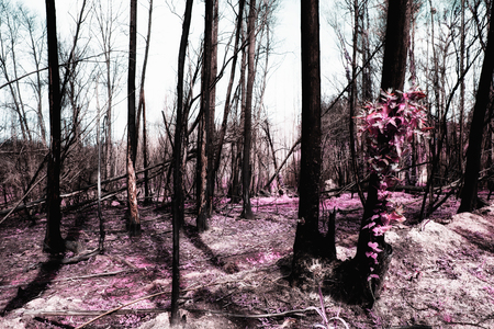 After the fire in the Boco village