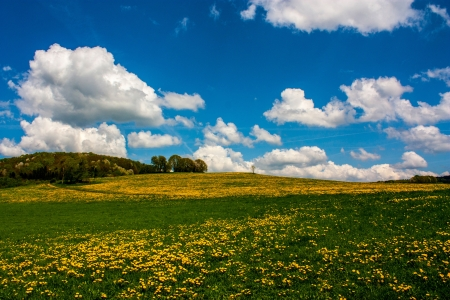 Colorful landscape with dandelion meadow and one single tree. photo