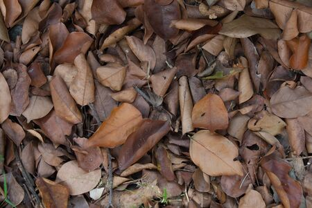 dry leaf  garbage fallen  background Stockfoto