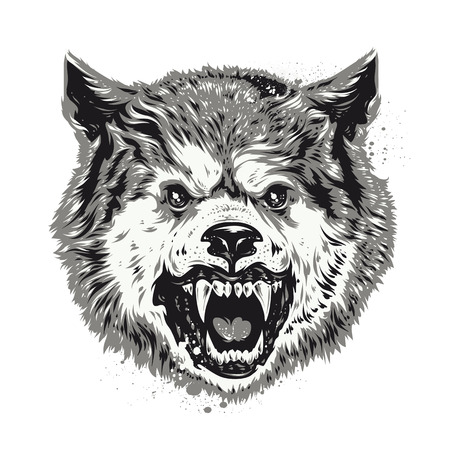 wolf head: Wolf head grunge vector art.