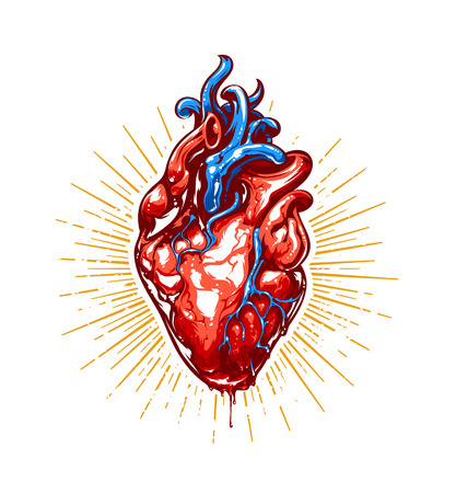 heart organ: Anatomical heart with beams. Vector art.