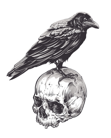 engraving: Crow on skull isolated on white. Hand drawn vector art. Sketch vector illustration. Illustration