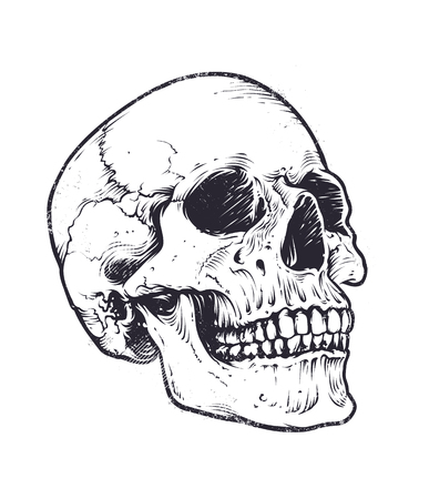Anatomic Skull Vector Art. Detailed hand-drawn illustration of skull. Grunge weathered illustration. Иллюстрация