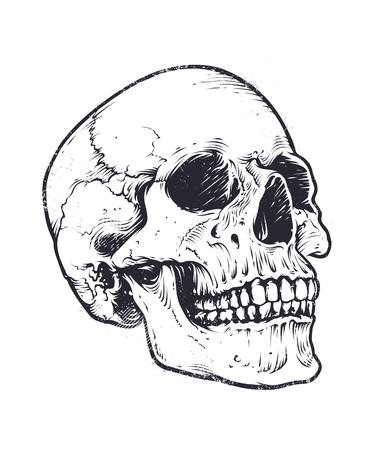 Anatomic Skull Vector Art. Detaillierte handgezeichnete Illustration des Schädels. Grunge verwitterte Illustration. Vektorgrafik