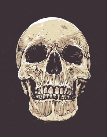 Anatomic Grunge Skull Vector Art. Detailed hand drawn illustration of skull on dark background. Colored version. Tattoo style skull art. Grunge weathered illustration.