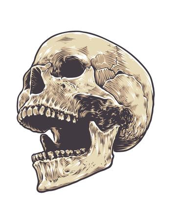 Anatomic Grunge Skull Vector Art. Detailed hand drawn illustration of skull isolated on white background. Colored version. Tattoo style skull art. Grunge weathered illustration. Vector Illustration