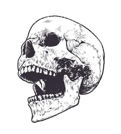 해부학 해골 벡터 아트. 오픈 입으로 두개골의 상세한 손으로 그린 그림. 그런 지 그림 풍화.