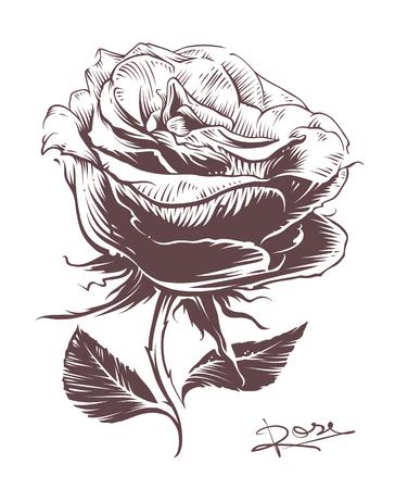 Main Vintage dessinée rose. Vintage vecteur fleur de style. Line art. style de gravure rose illustration. Banque d'images - 73215744