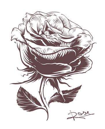 Vintage hand drawn rose. Vintage style vector flower. Line art. Engraving style rose illustration.