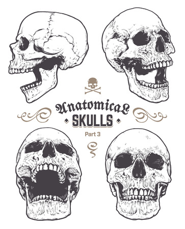 Anatomical Skulls Vector Set. Hand drawn skulls isolated on white background. Monochrome skull arts. Retro styled anatomical skulls. Vector graphics.