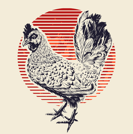 Vector Rooster Illustration. Engraving style cock and red sun. Retro art.