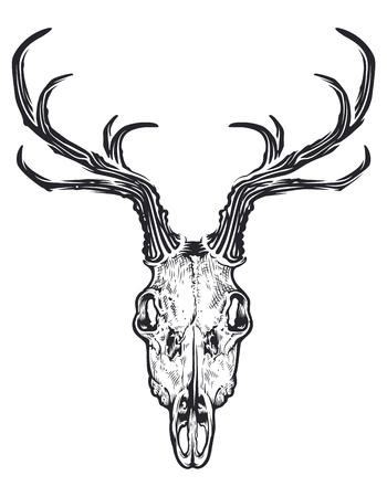 Engraving retro style deer skull isolated on white background. Vintage art of deer skull. Boho style art. Vector illustration.