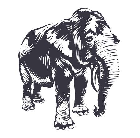 Black elephant silhouette isolated on white background. Engraving retro stle elephant vector art.