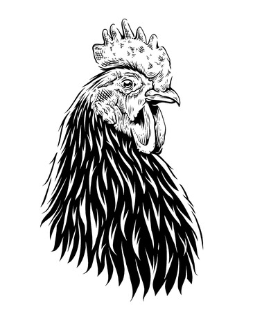 Vector Rooster Illustration. Engraving style cock. Retro art isolated on white.