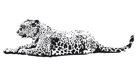 Leopard liggend zwart-wit afbeelding geïsoleerd op wit. Vector wilde kat kunst.
