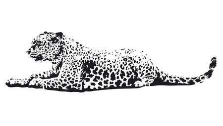 Leopard lying monochrome illustration isolated on white. Vector wild cat art. Vettoriali