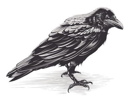 Corbeau de vecteur isolé sur blanc. Art vectoriel dessiné à la main. Illustration vectorielle de croquis.