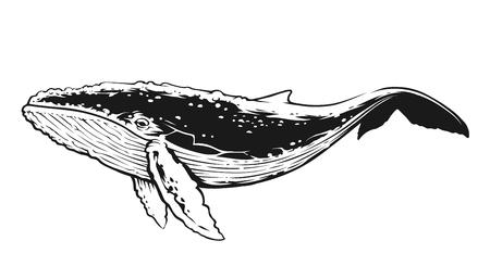 Baleine en mouvement vue latérale. Art vectoriel de contraste noir et blanc. Vecteurs