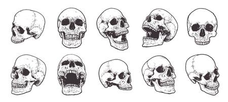 Conjunto de vectores de cráneos anatómicos dibujados a mano.