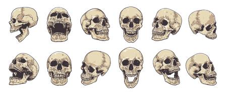 Hand-drawn Anatomical Skulls Vector Set.