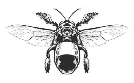 Vector engraving style insect art isolated on white. Vintage bug illustration. Foto de archivo - 138167984