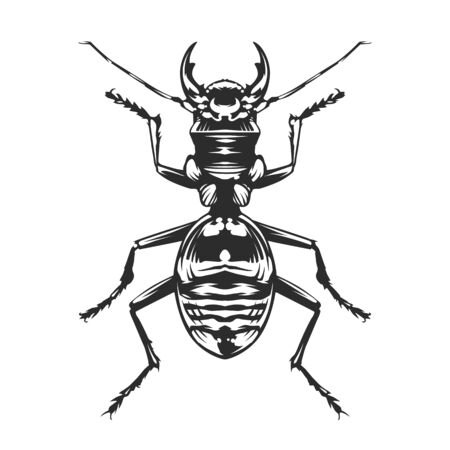 Vector engraving style insect art isolated on white. Vintage bug illustration. Foto de archivo - 138171180