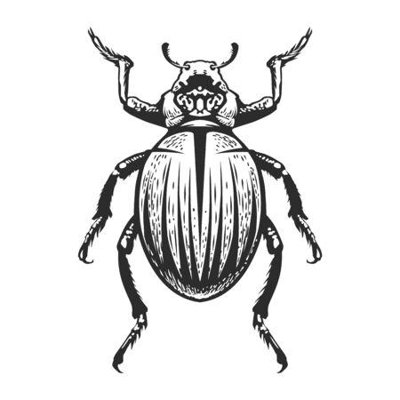 Arte del insecto del estilo del grabado del vector aislado en blanco. Ilustración de error vintage. Ilustración de vector