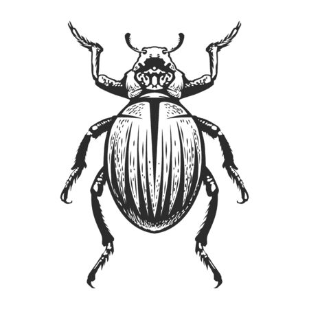 Vector engraving style insect art isolated on white. Vintage bug illustration.