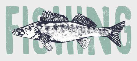 Engraving style zander fish vector illustration. Vectores