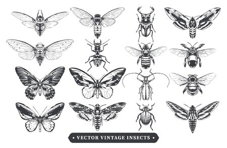 Vector set of different insects: bugs, ants, butterflies, bees, moth. Vintage style hand-drawn design elements isolated on white. Grouped and layered. Vector graphic.