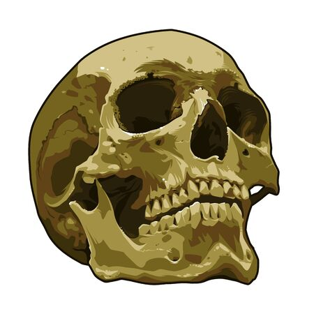 Anatomy realistic skull vector art isolated on white. Detailed skull illustration. EPS10 vector graphic. Vectores