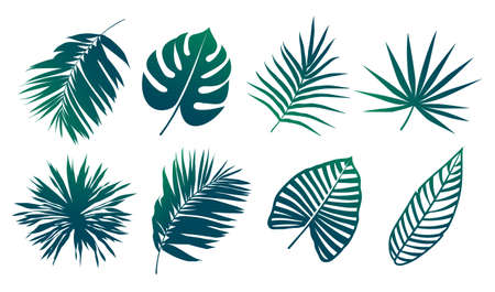 Tropical leaves silhouettes isolated on white. Tropical leaf shapes vector set. Vector EPS10 illustration.
