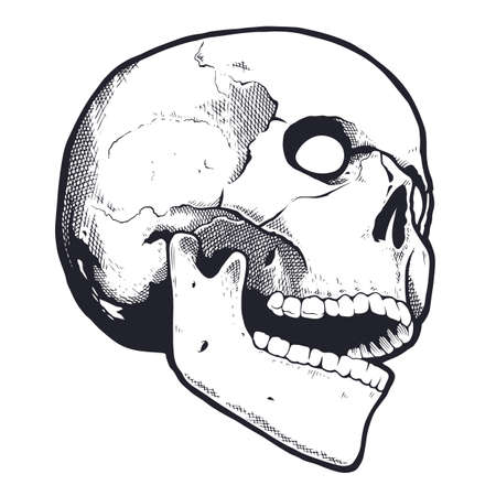 Engraving Style Skull With Open Mouth. Black and white vector illustration of skull looking mad. Vector object isolated on white.